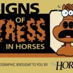 Psychology-Infographic-Infographic-Signs-of-Stress-in-Horses Psychology Infographic : Infographic: Signs of Stress in Horses