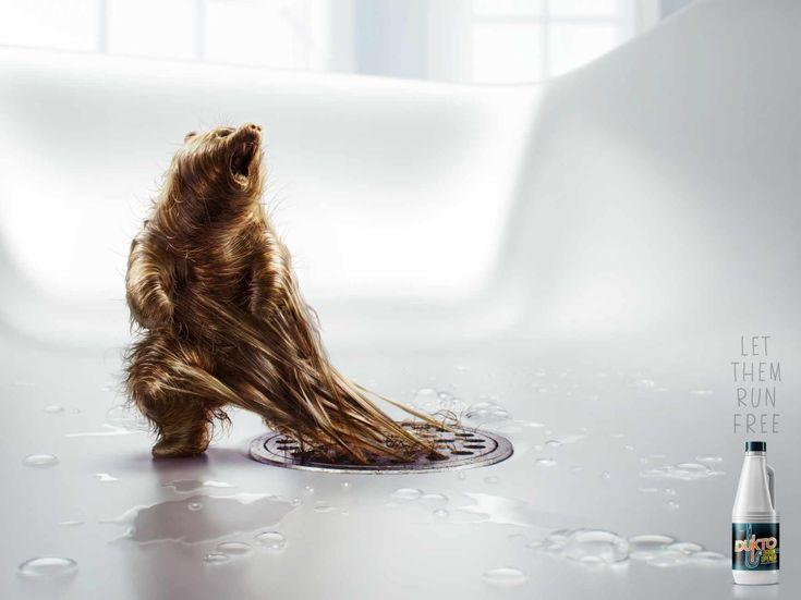 "Advertising-Campaign-Dukto-drain-opener-Bear-Let-them-run-free.-Advertising-Agency-Fahrenheit-D Advertising Campaign : Dukto drain opener: ""Bear""  Let them run free.  Advertising Agency: Fahrenheit D..."