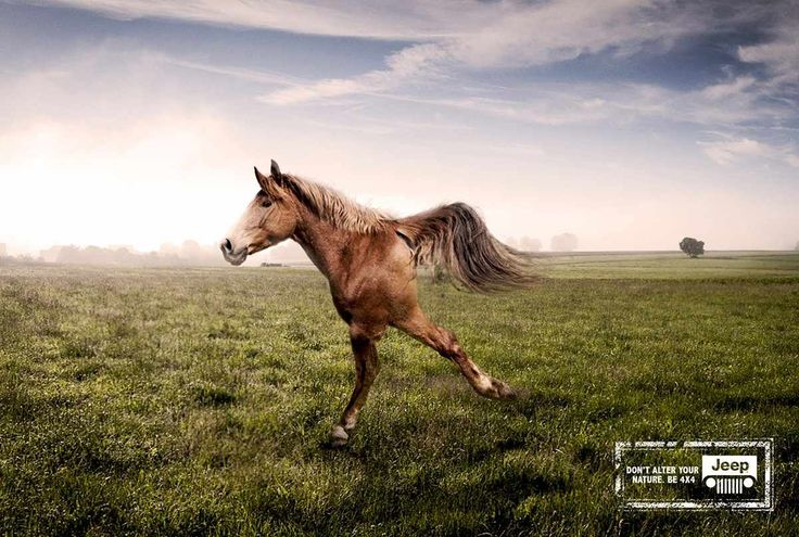 Advertising-Campaign-Jeep-Horse Advertising Campaign : Jeep: Horse