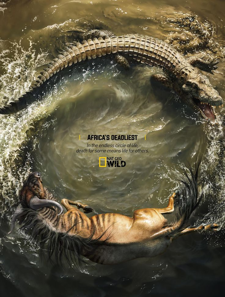 Advertising-Campaign-Africa39s-Deadliest-Crocodile-X-Wildebeest-Nat-Geo-Campaign-by-Rocket-Yard Advertising Campaign : Africa's Deadliest - Crocodile X Wildebeest  Nat Geo Campaign by Rocket Yard...