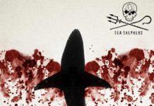 Advertising-Campaign-Sea-Shepherd-Ocean39s-wings-3-218x150 Home
