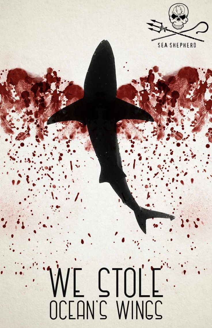 Advertising-Campaign-Sea-Shepherd-Ocean39s-wings-3 Advertising Campaign : Sea Shepherd: Ocean's wings, 3